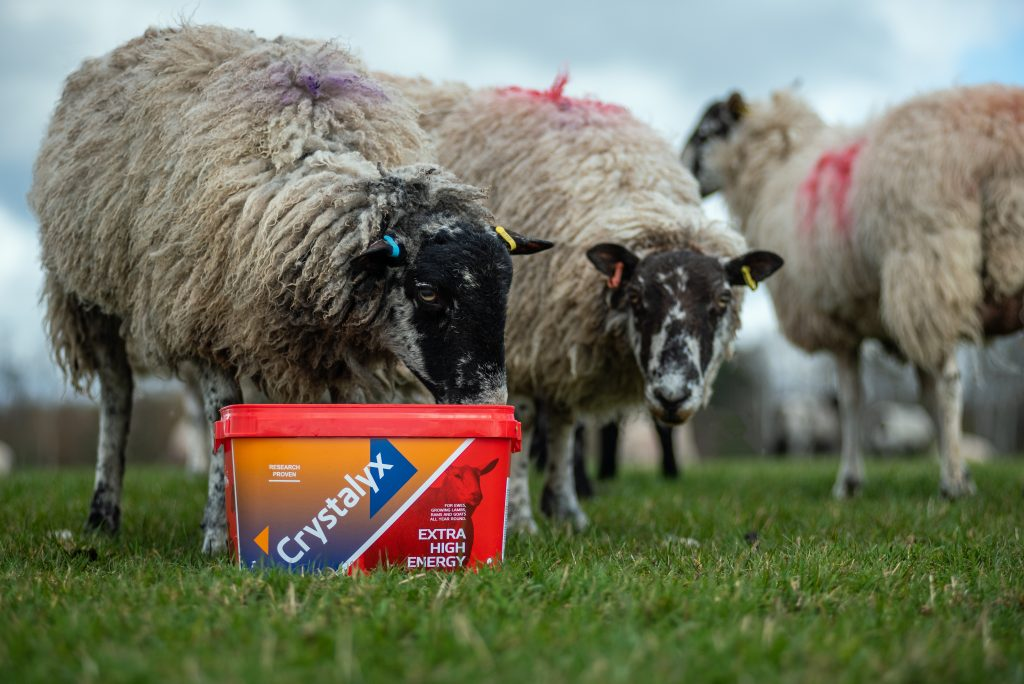 Crystalyx Extra High Energy Tupping feed tub