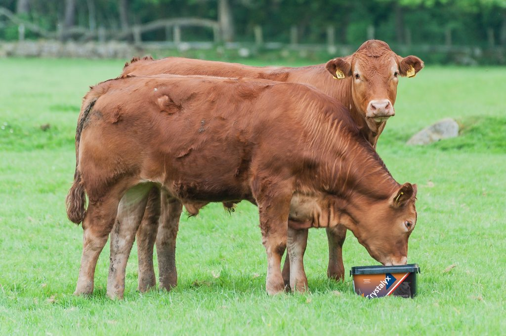 Crystalyx Garlyx Beef Cattle