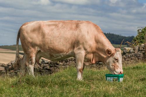 Cystalyx cattle high mag