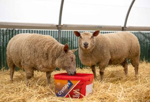 Crystalyx Extra High Energy red tub for sheep