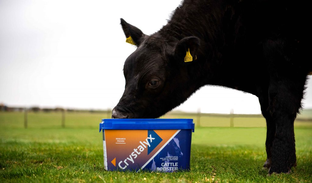 Crystalyx Cattle Booster Turnout